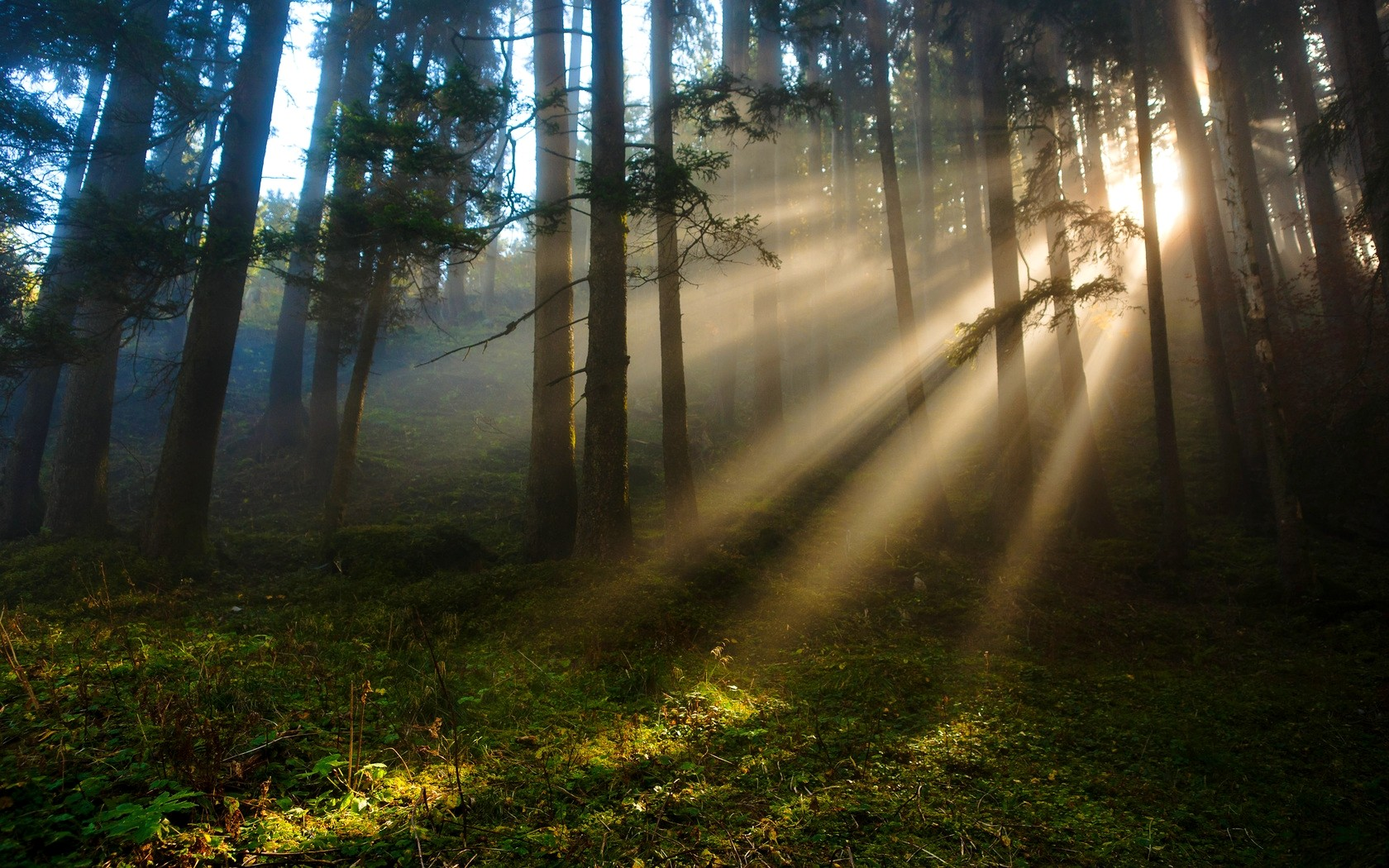 Sunlight in the Appalachian forest
