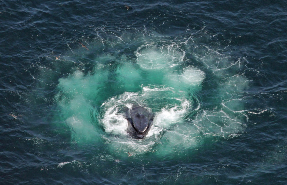 The Secret World of Whales