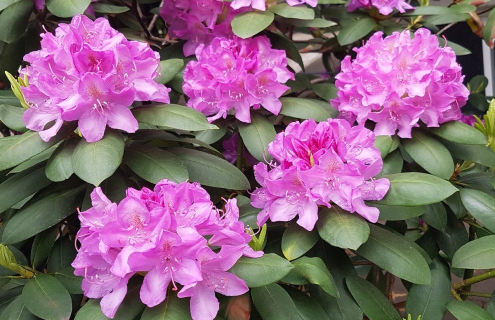 Flowers on My Street